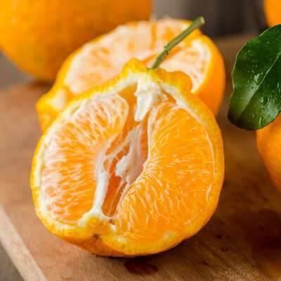 不知火丑橘