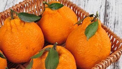 丑橘成熟照片