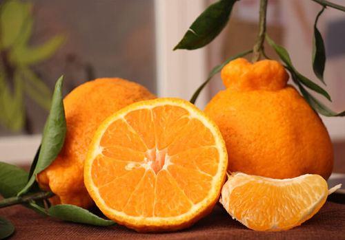 不知火丑橘图