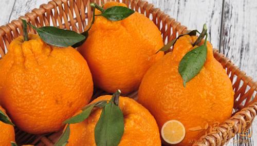 精品丑橘图片4