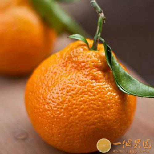 精品丑橘图片3