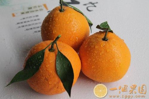 假冒丑橘图片2