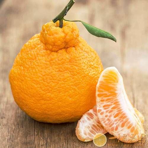 丑橘果肉2