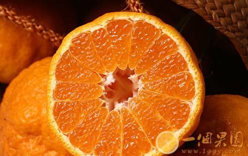 丑橘果肉4