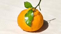 丑橘有什么营养价值